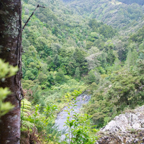 Taheke Waterfall Track photo