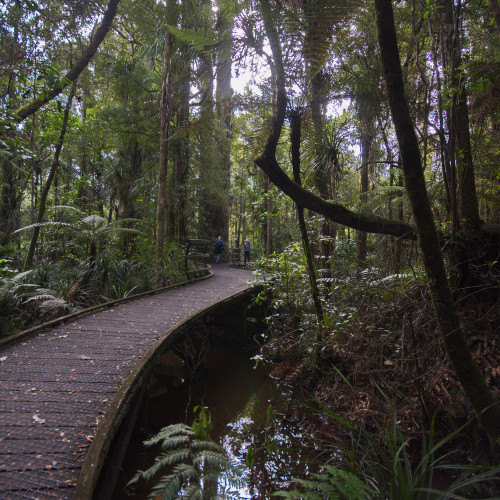 Puketi Nature Trail photo