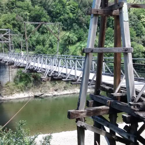 Tauranga Loop Track photo