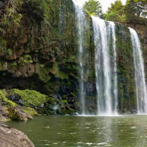 AH Reed Memorial Park to the Whangarei Falls - Otuihau photo