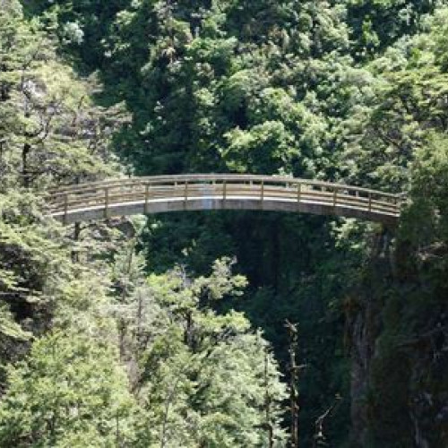 Rangiwahia Hut Track photo